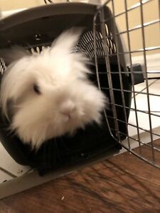 Sweet bunny free to loving home ASAP