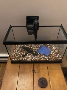 10 gallon aquarium full set up