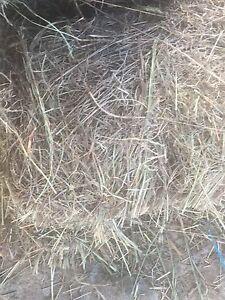 Grass hay Lockyer Waters Lockyer Valley Preview