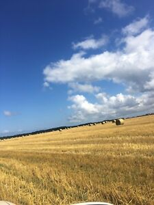 Oats and barley straw for sale all rotocut/chopped