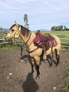 4 year old Quarter horse
