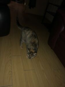 Female cat in need of a home