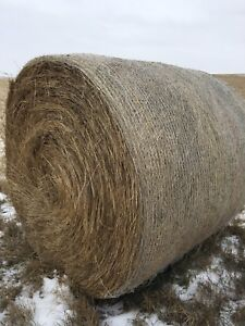 Hay for sale( sale pending)
