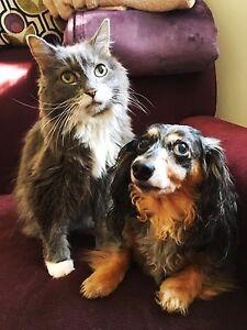 Dog Walker, Cat Sitter in NOTRE-DAME-DE-L'ÎLE-PERROT