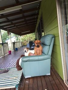 Pet sitter wanted Craignish Fraser Coast Preview