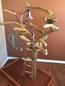 Large parrot java tree play stand