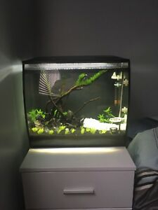 15 gallons fluval flex with aquascaping set up