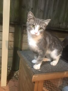 Loving and playful kitten looking for a new home
