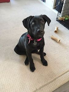 Looking for a forever home!