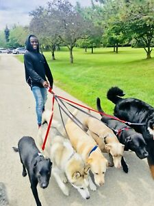 DOWNTOWN - DOG WALKER AVAILABLE- AFFORDABLE QUOTES