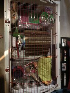 Guinea Pig or Rabbit Kit!
