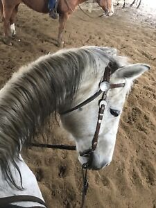Look or for a horse to part board