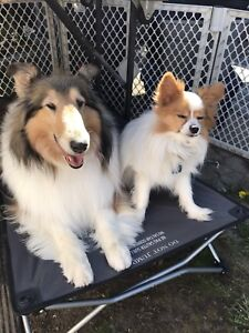 Pet sitter available in lake country
