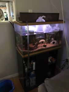 29 gallon fish tank + stand