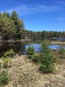 1.6 Acres Of Vacant Land For Sale In Tweed Your Camping Oasis