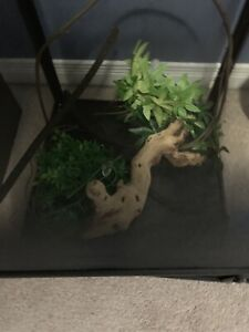 Terrarium Kijiji In Kitchener Waterloo Buy Sell Save With