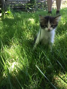 Kittens looking for good homes.