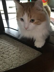 Loving Cat looking for a new home