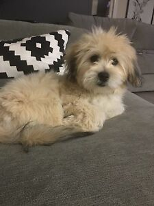 Looking for small breed - Female Burwood Burwood Area Preview