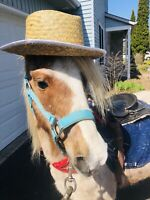 Pony Rides at your home!