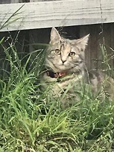 Female 6 months Cat