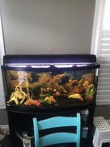 72 GALLON BOW FRONT TANK WITH FISH