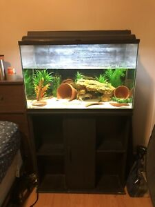 Two Axolotls and Fish Tank and Stand