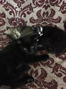 Giveaway kittens! Wynyard Waratah Area Preview