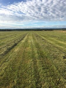 Farm land / pastureland for sale west of Thorsby
