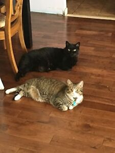 2 loving brothers looking for their forever home
