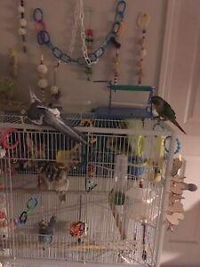 Taking unwanted birds