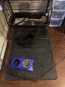 Rabbit, cage & accessories