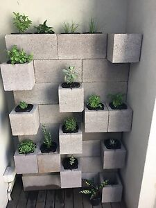 Vertical Wall Garden Cremorne Yarra Area Preview