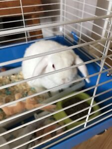 6 month bunny with large cage