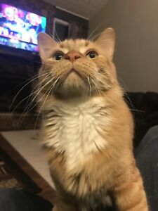 Super friendly kid and other pet friendly cat