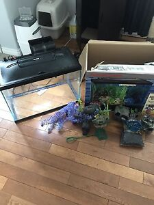Start your own fish tank!