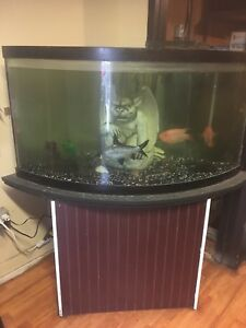 90 gallon corner tank aquarium