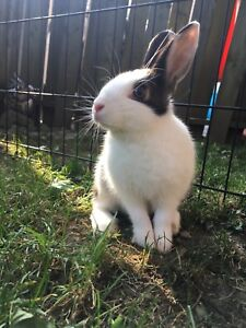 Bunny looking for a new home!
