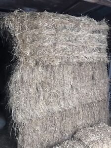 Horse hay $50 each or $800 for all
