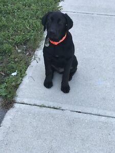 Dog Walking Servicing Mississauga, Brampton & Milton area