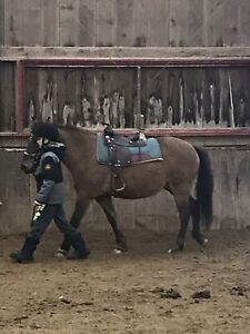 Pony for Sale, offers welcome