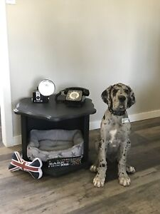 End table pet bed
