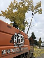 Tree Service - Winter Savings on all work!