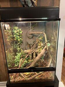 Lézard Basilic Vert et terrarium à vendre