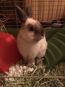Loving  male rabbit looking for a good home