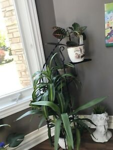 Moving sale on idoor plants with wrought iron planter