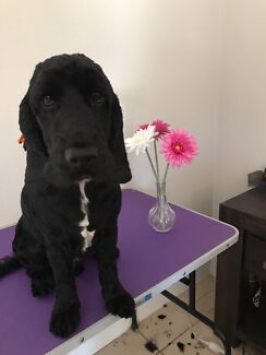 Dog grooming , home salon in Clarkson