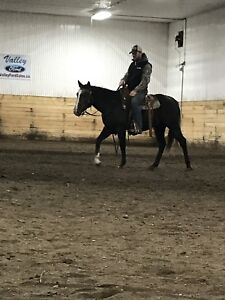 Started 2 year old Filly