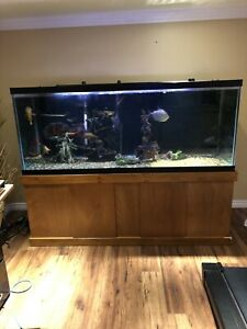 220 gallon Fish tank and fish for sale.