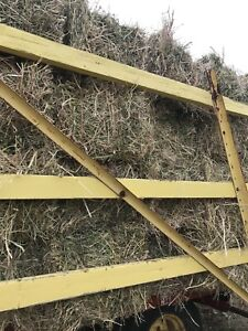 Hay for goats